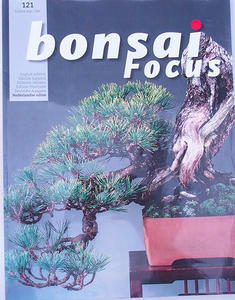 Bonsai focus - holandsky č.121