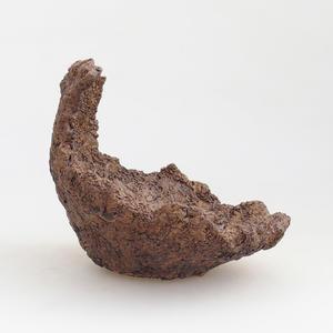 Pokojová bonsai - Zantoxylum piperitum - Pepřovník PB2191503