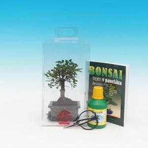 Izbová bonsai v darčekovej krabičke