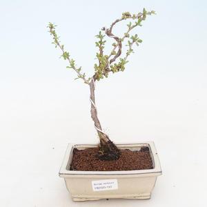 Keramická bonsai miska HVĚZDICE