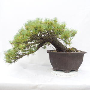 Keramická bonsai miska 10,5 x 10,5 x 3  cm, barva hnědá