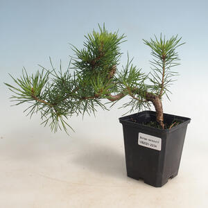 Keramická bonsai miska 18,5 x 18,5 x 19 cm barva hnědozelená