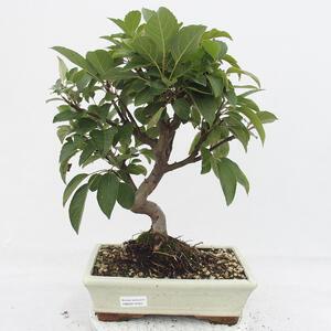 Keramická bonsai miska 31 x 26 x 10,5  cm, barva hnědozelená