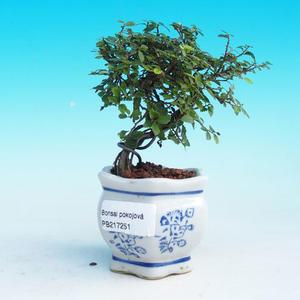 Izbová bonsai -Malolistý brest - P217251