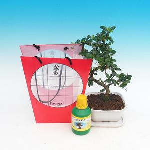 Pokojová bonsai v dárkové tašce
