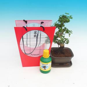 Pokojová bonsai v dárkové tašce, Ligustrum chinensis - Ptačí zob