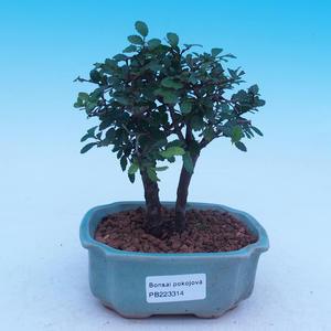 Venkovní bonsai - Cedrus Libani - Cedr stříbrný