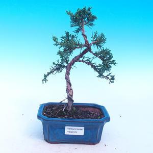 Vonkajšia bonsai-Juniperus chinenssis-Jalovec čínsky