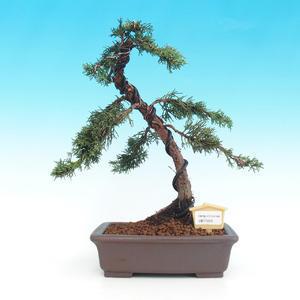 Pokojová bonsai- Pistácie