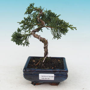 Venkovní bonsai-Juniperus chinenssis-Jalovec čínský