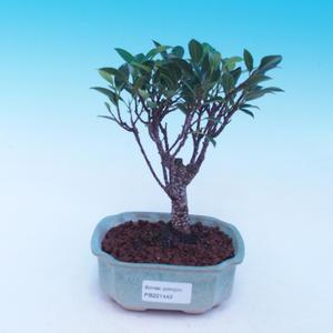 Venkovní bonsai -Maloplodá jabloň - Malus halliana