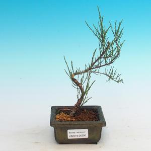Vonkajšie bonsai - Tamaris parviflora Tamariška malolistá