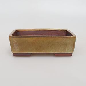 Venkovní bonsai - Javor Buergerianum - Javor Burgerův VB2019-26721