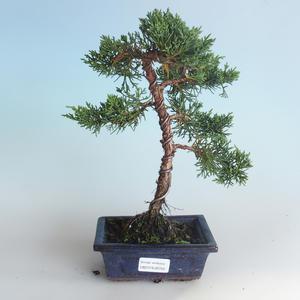 Venkovní bonsai - Juniperus chinensis -Jalovec čínský 408-VB2019-26740