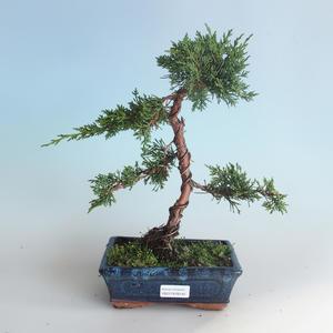 Venkovní bonsai - Juniperus chinensis -Jalovec čínský 408-VB2019-26742