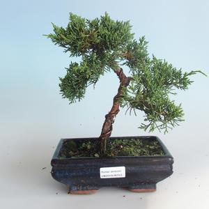 Venkovní bonsai - Juniperus chinensis -Jalovec čínský 408-VB2019-26743