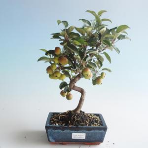 Vonkajšie bonsai - Malus halliana - Maloplodé jabloň 408-VB2019-26751