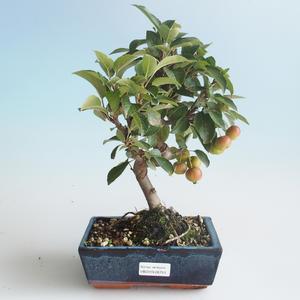 Vonkajšie bonsai - Malus halliana - Maloplodé jabloň 408-VB2019-26753