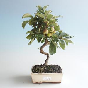 Vonkajšie bonsai - Malus halliana - Maloplodé jabloň 408-VB2019-26760