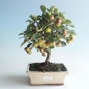 Vonkajšie bonsai - Malus halliana - Maloplodé jabloň 408-VB2019-26766