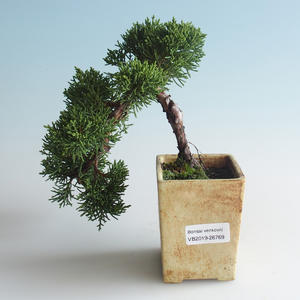Venkovní bonsai - Juniperus chinensis -Jalovec čínský 408-VB2019-26769