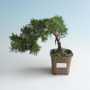 Venkovní bonsai - Juniperus chinensis -Jalovec čínský 408-VB2019-26770