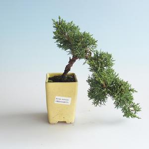 Venkovní bonsai - Juniperus chinensis -Jalovec čínský 408-VB2019-26771