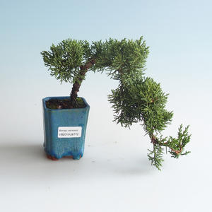 Venkovní bonsai - Juniperus chinensis -Jalovec čínský 408-VB2019-26772