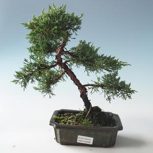 Venkovní bonsai - Juniperus chinensis -Jalovec čínský 408-VB2019-26785
