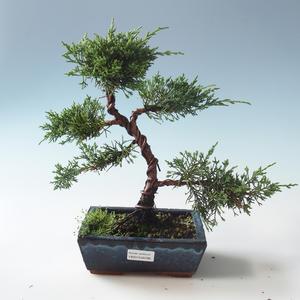 Venkovní bonsai - Juniperus chinensis -Jalovec čínský 408-VB2019-26786