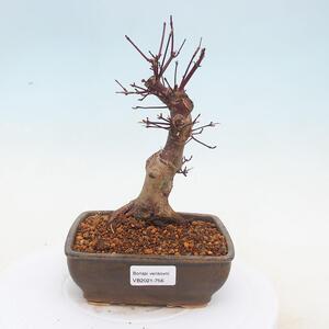 Keramická bonsai miska - Pálená na dřevě