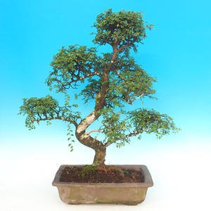 Keramická bonsai miska