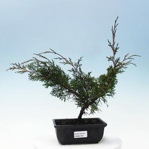 Keramická bonsai miska 11 x 11 x 11,5 cm, barva béžová