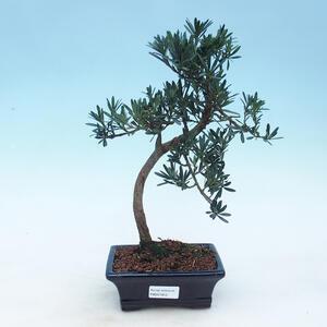 Keramická bonsai miska 15 x 15 x 15,5 cm, barva zelená