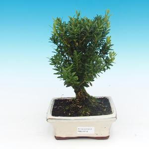 Keramická bonsai miska - páleno v plynové peci 1240 °C