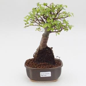 Keramická bonsai miska RYBKA