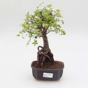 Keramická bonsai miska ČUNÍK