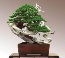Jalovce - Juniperus