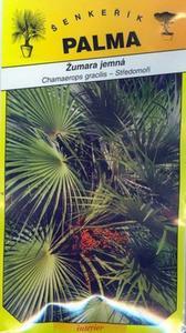 Zumar jemná - Chamaerops gracilis