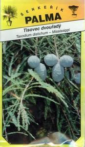 Tisovec dvojradový - Taxodium distichum