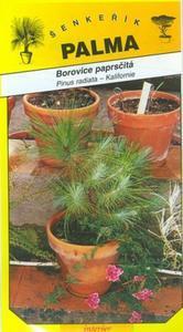 Borovice paprsčitá - Pinus radiata