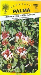 Zimolez ovíjavý (Ruža z Jericha) - Lonicera Peric