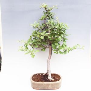 Venkovní bonsai -Maloplodá jabloň VB50100