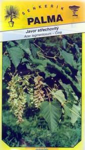 Javor strechovitý - Acer tegmentosum