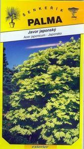 Javor japonský - Acer japonicum