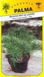 Borovica klečvar. pumilio -Pinus mugo pumiilio