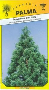 Sekvojec obrovský - Sequoiadendron giganteum