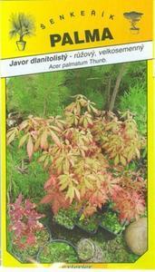 Javor dlanitolistý růžový - Acer palmatum Thunb.