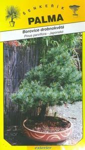 Borovica drobnokvetá - Pinus parviflora