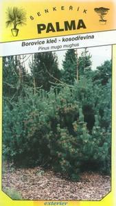 Borovica kleč- kosodreviny - Pinus mugo mugnus